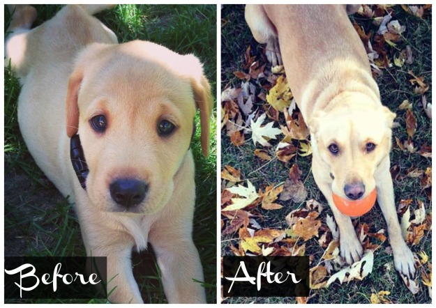 Before and After Bela